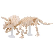 Triceratops Skeleton Model